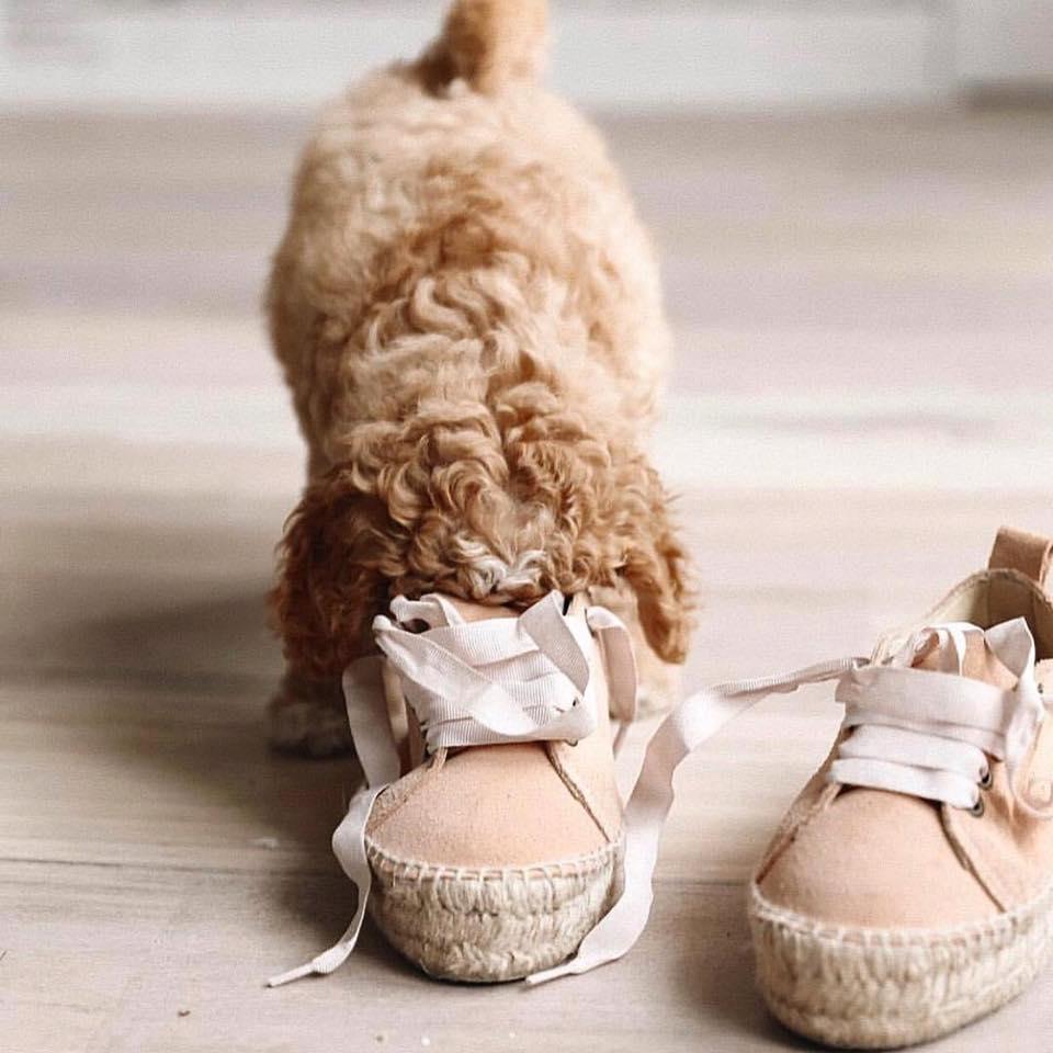 Manebi-Hamptons-Pastel-Rose-Sneakers